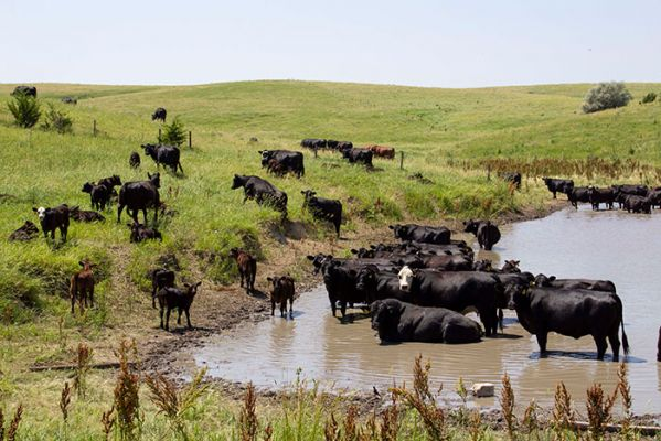 Increasing reports of polio, blindness and toxicity in cattle are all signs that water quality has been compromised.