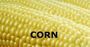 ND-Corn Report