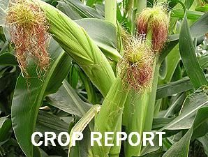 Weekly Crop Report for April 16