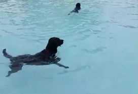 A dog does a little swimming at the Spearfish Rec and Aquatic Center at the annual Dog Days in the Pool Tuesday.