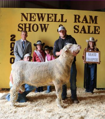 Grand Champion Ram consigned by Ben Pearson, Hettinger, ND