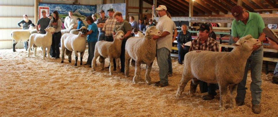 The largest community sponsored event of its kind in the country, the 74th annual Nwell Ram Show & Sale offers breed, wool shows, sales.