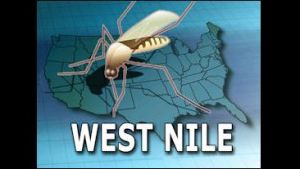West Nile-Horse Report