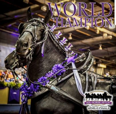 Spectators can see the Young Living Essential Oil Percheron Hitch in the arena during Rodeo Rapid City.  The horses are also available for viewing in the Rodeo Zone throughout stock show week.