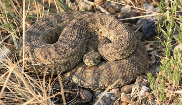 The public is reminded that with warmer weather, rattlesnakes will be emerging from dens.  Be aware of surroundings at all times and wear appropriate footwear when hiking.